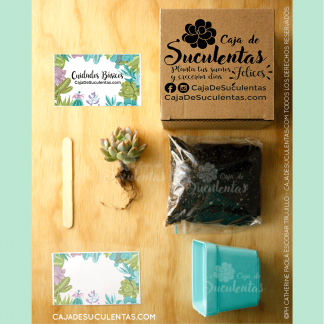 Kit Caja De Suculentas Siembra